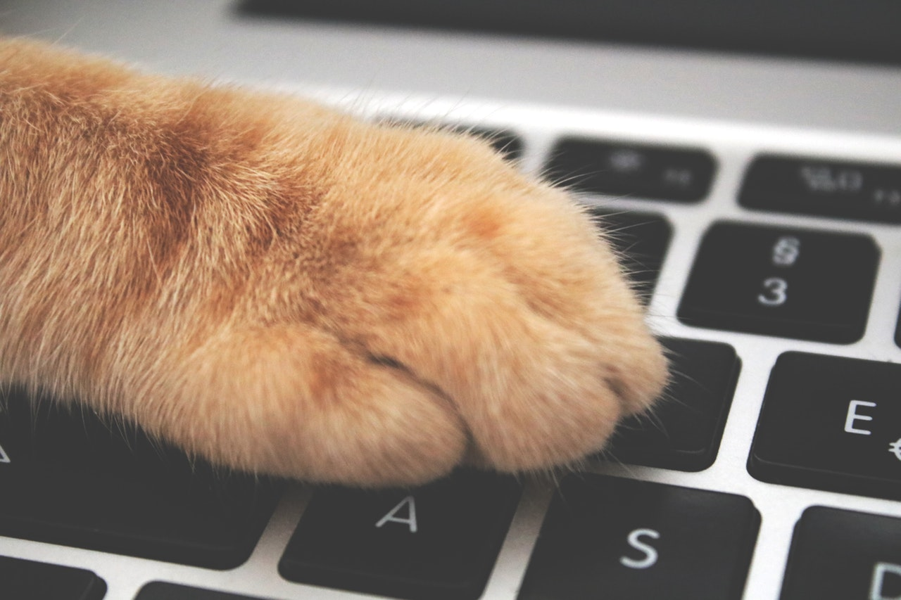 Kattepote på tastatur